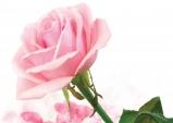 """[북한돋보기] """"북한동포의 삶에 '행복의 꽃' 만개할 봄날은?"""""""